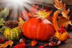 Autumn harvest on wooden background Royalty Free Stock Photography
