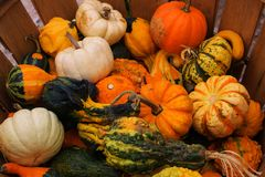 Autumn Harvest - zucca e zucche Fotografie Stock