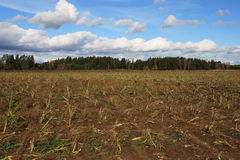 Autumn harvested field Royalty Free Stock Images