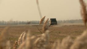 Autumn combines in the field harvesting the wheat. Autumn harvesters tractor and trucks in the field, harvesting wheat rye cereals sun stock video