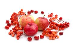 Autumn harvesting. Composition of fruits, berries on a white background. Apples, viburnum, dogwood stock images