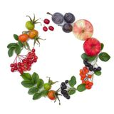 Autumn harvesting. Composition of fruits, berries on a white background. Apples, viburnum, dogwood, dog rose, rowan, chokeberry. stock image