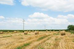 Autumn Harvesting Stock Photo