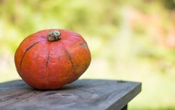 Autumn and harvesting: Pumpkin is lying on a rustic, wooden table. Text space. Orange pumpkin is lying on a rustic wooden table. Text space halloween fall autumn royalty free stock photos