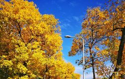 Autumn has arrived Royalty Free Stock Photography