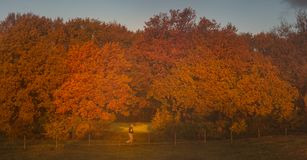 Autumn has arrived with colours Stock Images