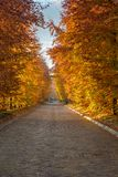 Autumn has arrived with colours Stock Photography