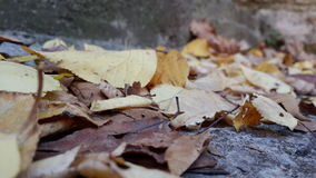 Autumn has arrived. Leaves on the stairs Royalty Free Stock Photo