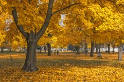 The autumn has cjme to a city. Stock Photo