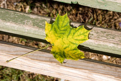 Autumn Has Come Royalty Free Stock Images