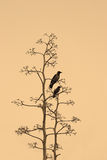 Autumn has come. Two crows on branches of a dry tree on yellow background Royalty Free Stock Photos