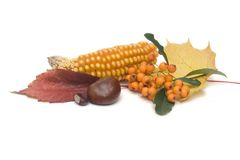 Autumn has come Royalty Free Stock Photography
