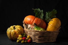Autumn has come (2). A group of pumpkins, placed in a wicker basket,  with a black background and a grazing light. Inspired to Renaissance still life paintings Stock Images