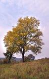 Autumn has come Royalty Free Stock Photos