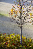 Autumn has come. Tree in the park. Royalty Free Stock Photography