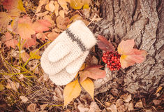 Autumn has come. A walk in the woods in October. Knitted woolen women's mittens a bunch of ripe viburnum on a background bright autumn forest Royalty Free Stock Photo