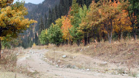 This autumn has painted trees in the mountains stock footage