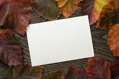 Autumn hawthorn leaves directly from above Royalty Free Stock Images