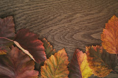Autumn hawthorn leaves directly from above Stock Images