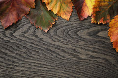 Autumn hawthorn leaves on old oak table Royalty Free Stock Images