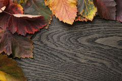 Autumn hawthorn leaves on old oak table Royalty Free Stock Image