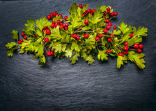 Autumn hawthorn with red haw berries on dark slate background Stock Image