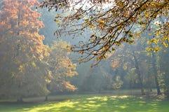 Autumn haze in the park. Beautiful autumn haze in the park Stock Photos