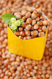 Autumn hazelnuts Stock Images