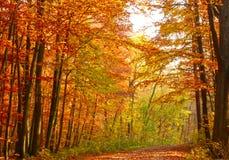Free Autumn HDR Royalty Free Stock Photo - 21962155