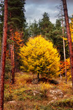 Autumn HDR Royalty Free Stock Images