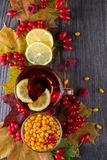 Autumn healthy beverages concept. Cup of tea with autumn berries sea buckthorn,  viburnum, rose hip, rowan and fall leaves. Drink Stock Photography