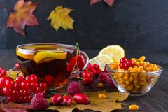 Autumn healthy beverages concept. Cup of tea with autumn berries sea buckthorn,  viburnum, rose hip, rowan and fall leaves. Drink Stock Images