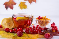 Autumn healthy beverages concept. Cup of tea with autumn berries sea buckthorn,  viburnum, rose hip, rowan and fall leaves. Drink Royalty Free Stock Photos