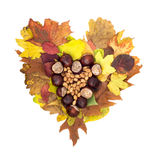 Autumn heart of horse-chestnuts and hazelnuts lying on colorful Stock Photos