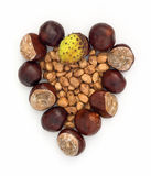 Autumn heart of horse-chestnuts and hazelnuts Stock Photo