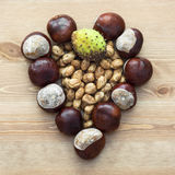 Autumn heart of horse-chestnuts and nuts Royalty Free Stock Images