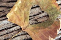 Autumn heart leaf Royalty Free Stock Photos