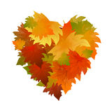 Autumn heart leaves. Frame with colorful leaves. Royalty Free Stock Images