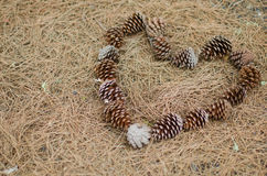 Autumn heart. A heart made with pinecones Stock Image