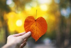 Autumn heart shaped leaf in a hand.  royalty free stock photography