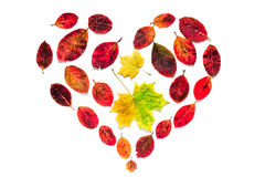 Autumn heart symbol of yellow maple and red leaves isolated on white background.  Stock Photo