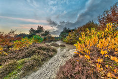 Autumn heathland landscape with yellow leaves Royalty Free Stock Photo