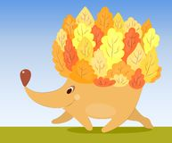 Autumn hedgehog Stock Photography