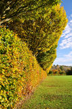Autumn Hedgerow Stock Photos