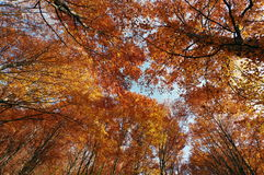 Autumn colors in a landscape in the forest. Colored leaves and blue sky. Autumn background Royalty Free Stock Photography