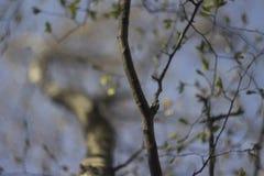 Autumn Helios bokeh. Helios 44m bokeh in the forest Stock Photo