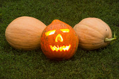 Autumn helloween pumpkin Royalty Free Stock Photography