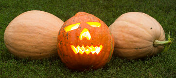 Autumn helloween pumpkin Stock Images