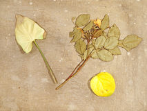 Autumn herbarium on a old dirty canvas. Royalty Free Stock Images