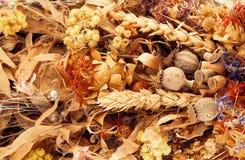 Autumn herbs. Royalty Free Stock Image